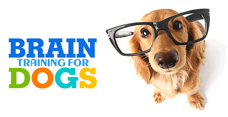 Download PDF Brain Training For Dogs Review